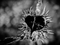 Ne hagyd, hogy benőjön a szíved lágya!