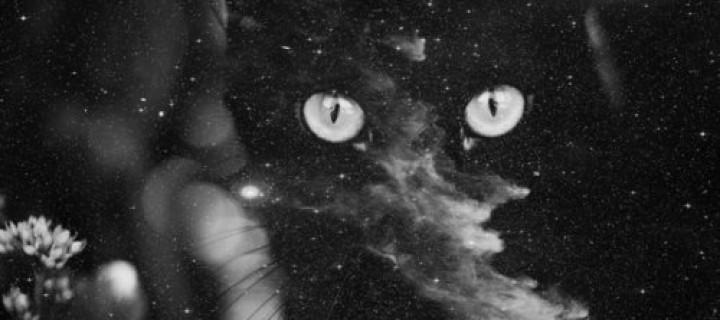A vörös kiscica karmai
