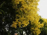 Megérintett titeket az ősz…
