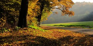 Csodás Ősz: az élet, ilyenkor sem áll meg