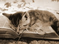 10 rossz szokás olvasás közben
