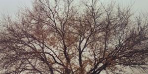 Télbe fordulva