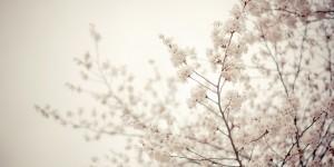 Tavaszom