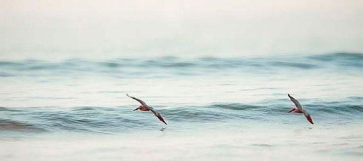 Merni, hinni és kincset találni- nagyító alatt Albert Tímea: Óceán, palackposta, mézeskalács című könyve