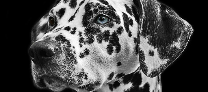 Tanuljunk meg kutyául! – ajánló A kutyák titkos élete c. könyvről