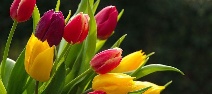 Vanessa Diffenbaugh: A virágok nyelve