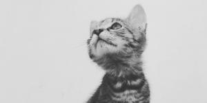 Ella, a gyáva macska