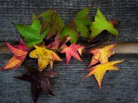 Kopp-kopp, itt az ősz!