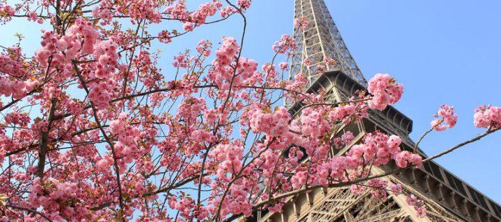 Párizsban nem sírnak a fák