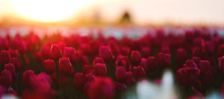 A vágy virága