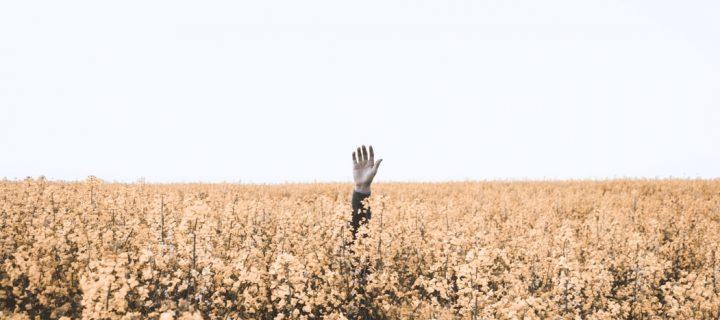 Hétköznapi örömforrás