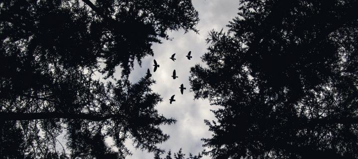 Fekete erdő